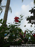 nomad4ever_indonesia_pulau_bintan_IMG_2767.jpg