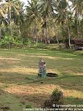 nomad4ever_indonesia_bali_life_CIMG1754.jpg