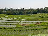 nomad4ever_indonesia_bali_landscape_CIMG1638.jpg