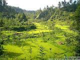 nomad4ever_indonesia_bali_landscape_CIMG1922.jpg