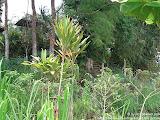 nomad4ever_indonesia_bali_landscape_CIMG1783.jpg
