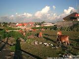 nomad4ever_indonesia_bali_landscape_CIMG2854.jpg