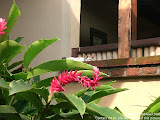 nomad4ever_indonesia_bali_landscape_CIMG2093.jpg