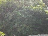 nomad4ever_indonesia_bali_landscape_CIMG2367.jpg