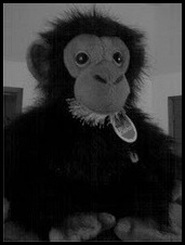 monkeyman33