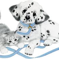 CatDog's.jpg