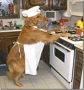 dog_helping_in_kitchen