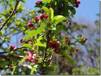 Botanical Garden 040