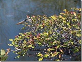 Botanical Garden 059