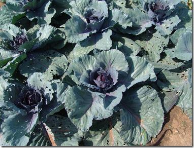 garden 2010 025