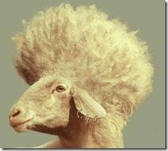 ovelha_punk