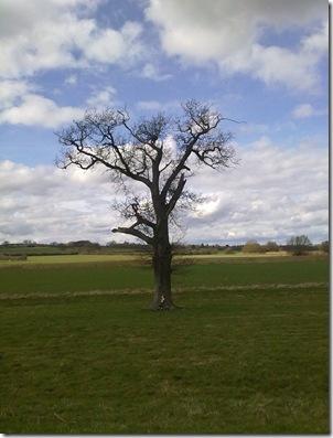 treeliftbridg