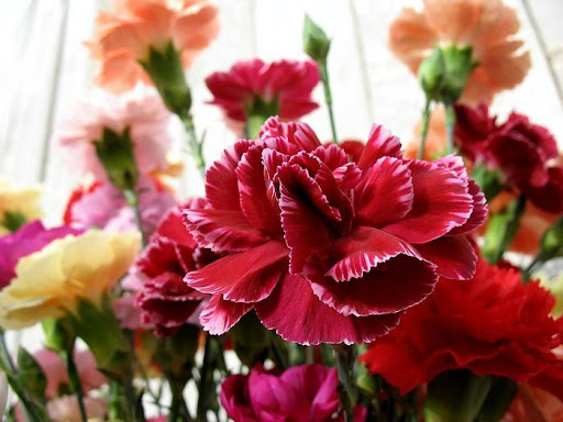 free mothers day flower images
