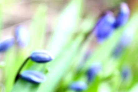 blomst[2]