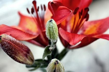 blomst3[1]