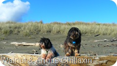 Angus & Walnut