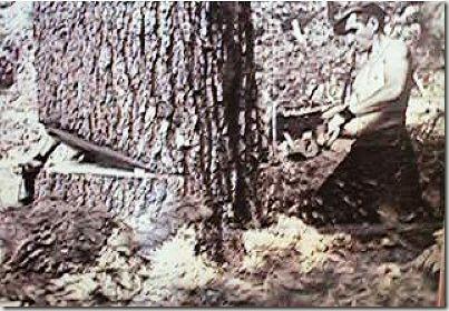 enormes árboles talados cosasdivertidas (16)