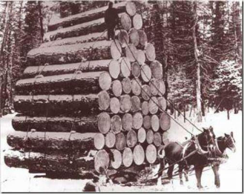 enormes árboles talados cosasdivertidas (22)