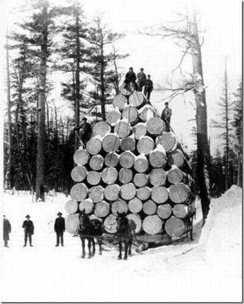 enormes árboles talados cosasdivertidas (23)