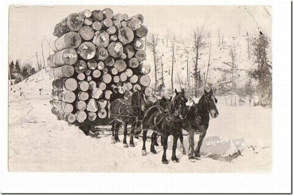 enormes árboles talados cosasdivertidas (28)