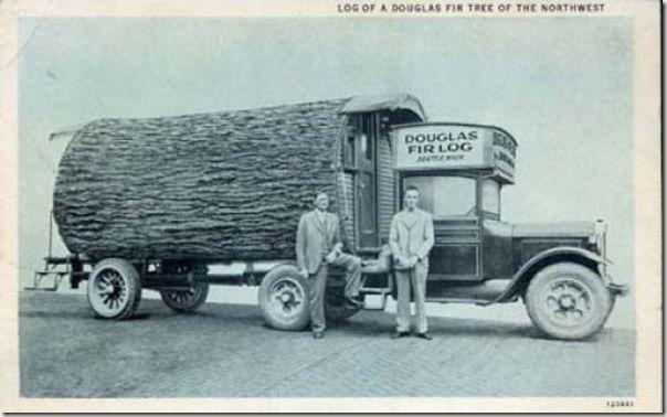 enormes árboles talados cosasdivertidas (38)