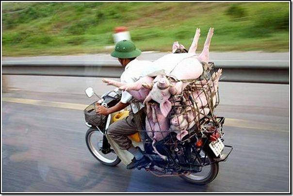transporte de mercancias cosasdivertidas (16)