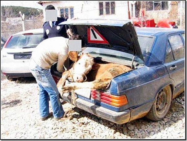transporte de mercancias cosasdivertidas (12)