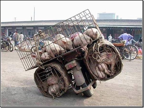 transporte de mercancias cosasdivertidas (13)