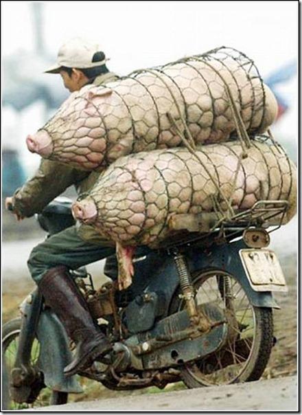 transporte de mercancias cosasdivertidas (14)