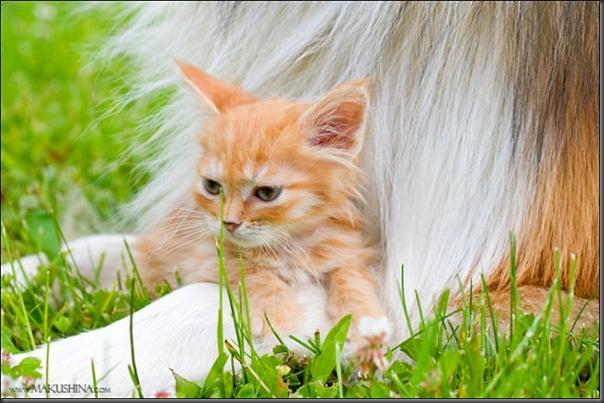 Encontro de um gatinho e um cachorro (8)