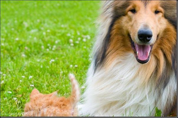 Encontro de um gatinho e um cachorro (1)