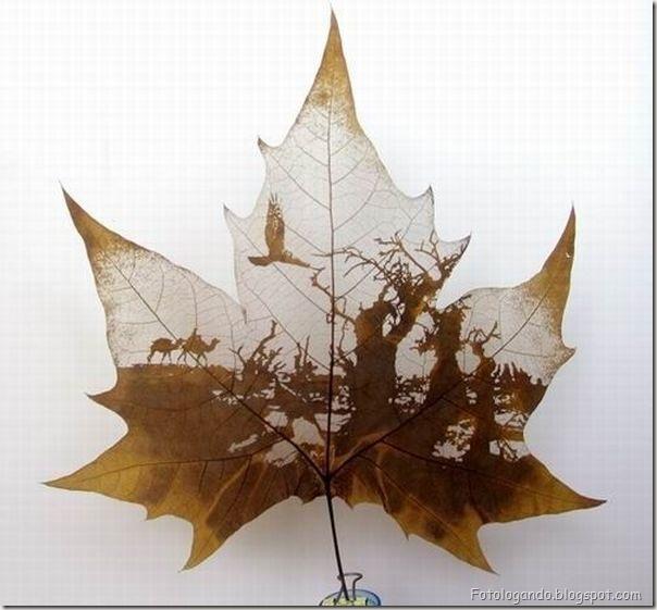Desenho em folhas secas (5)