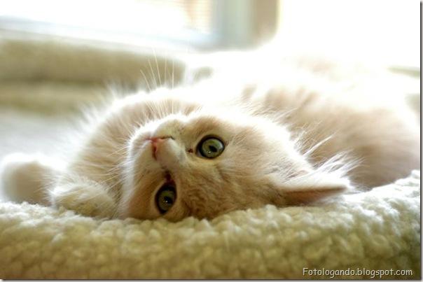 momento oinn especial gatos (98)