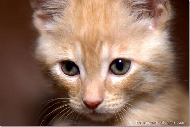 momento oinn especial gatos (72)