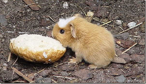 Pequeninos animais (61)
