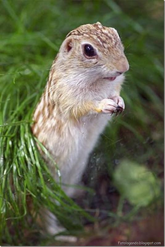 Pequeninos animais (5)