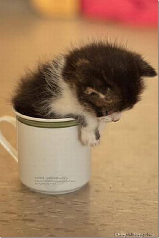 Pequeninos animais (4)