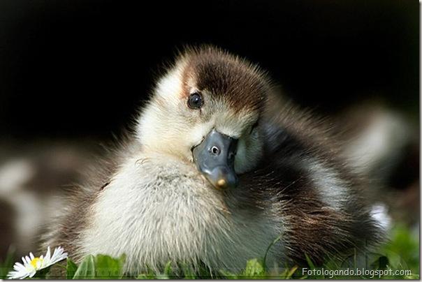 Pequeninos animais (3)