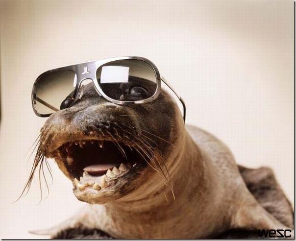 Animais de Oculos (12)