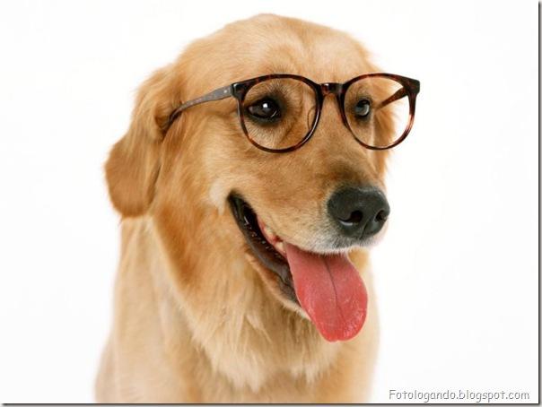 Animais de Oculos (8)