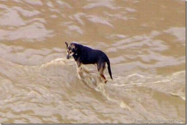 Dramático resgate de um cachorro