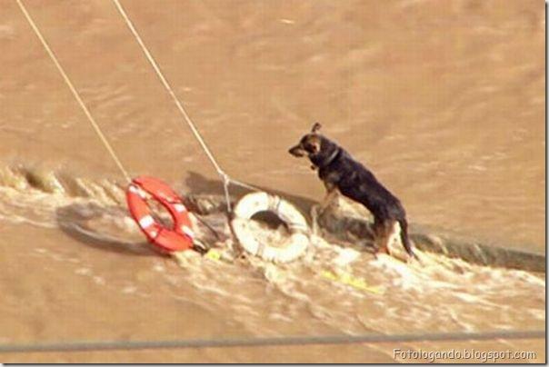 Dramático resgate de um cachorro (1)