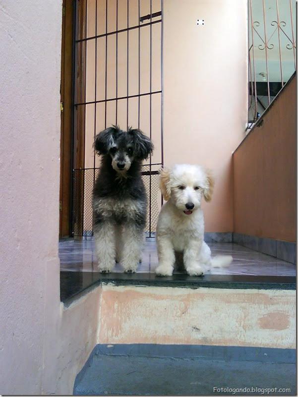 Kiko e Jack