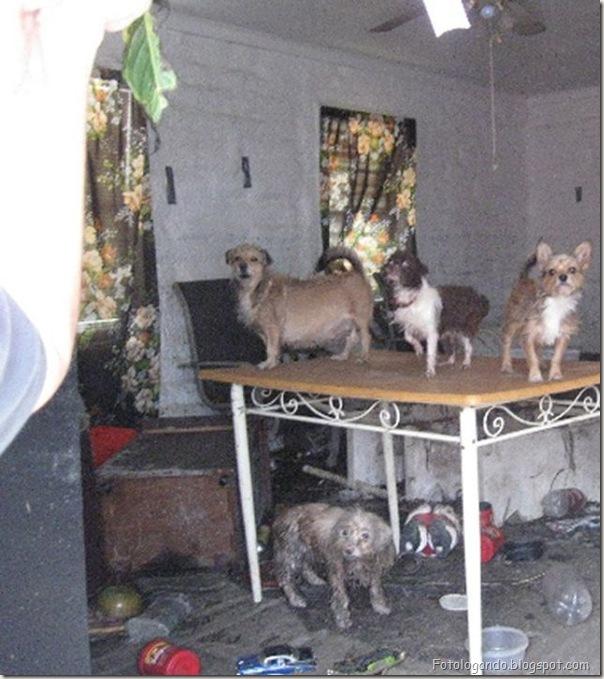 animais sós em casa (7)