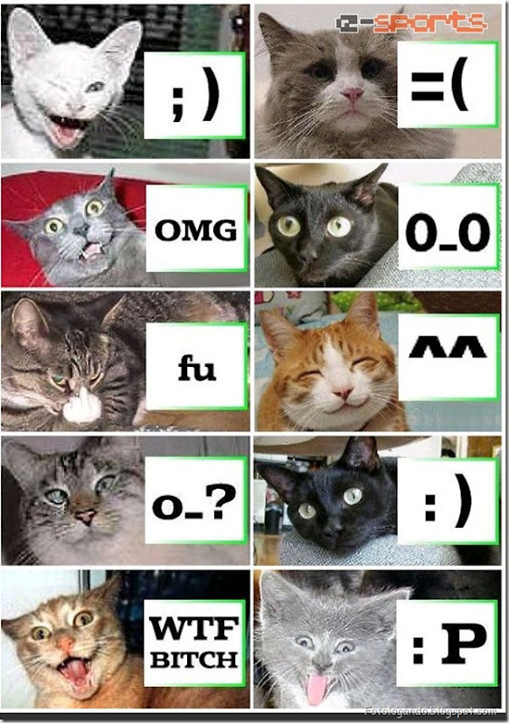 catfaces