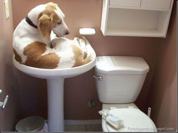 Cães no banho (14)