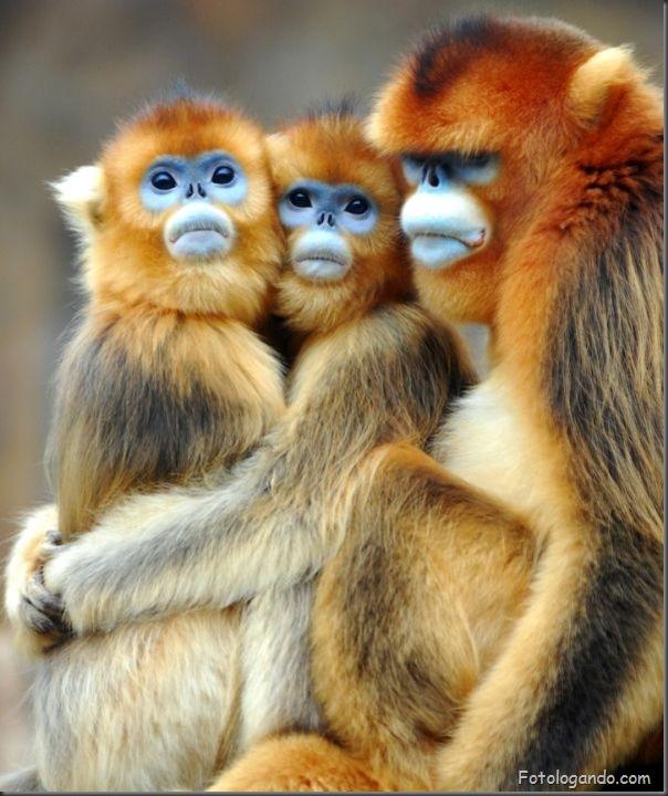 Fotos de animais no zoo capturadas no momento certo (13)