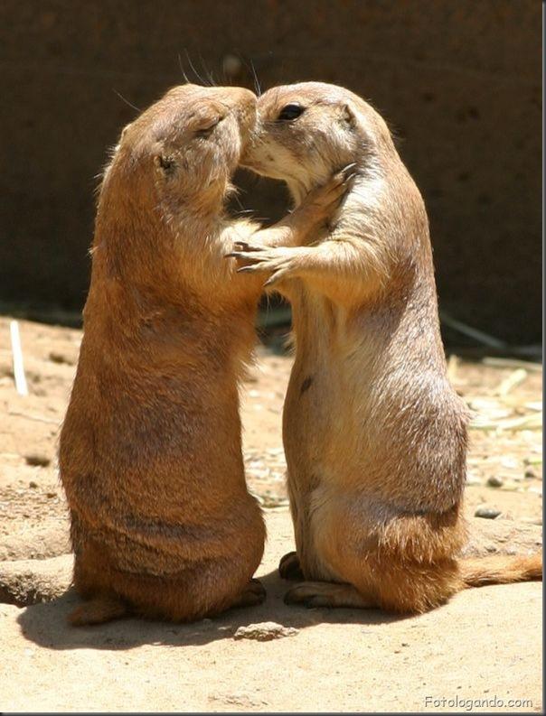 Fotos de animais no zoo capturadas no momento certo (8)