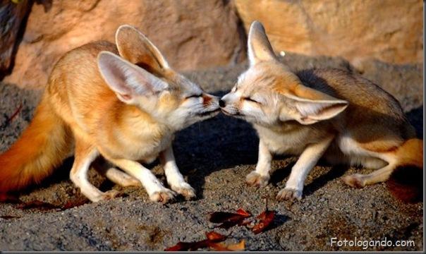 Fotos de animais no zoo capturadas no momento certo (7)