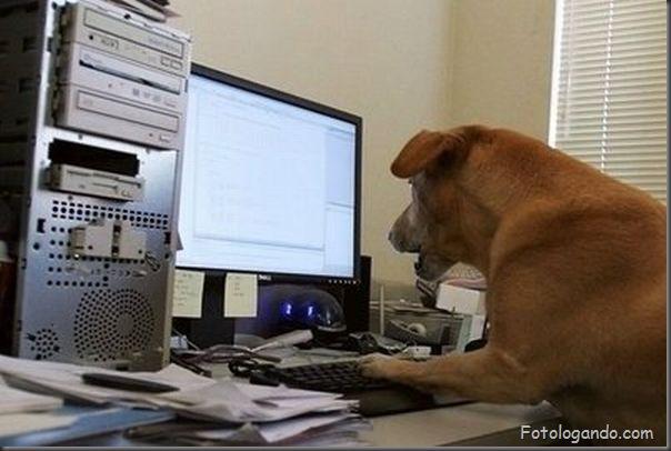 Animais no computador (7)